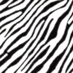Image of TwillUSA Mini Zebra Black and White Fashion Fabric Color Square