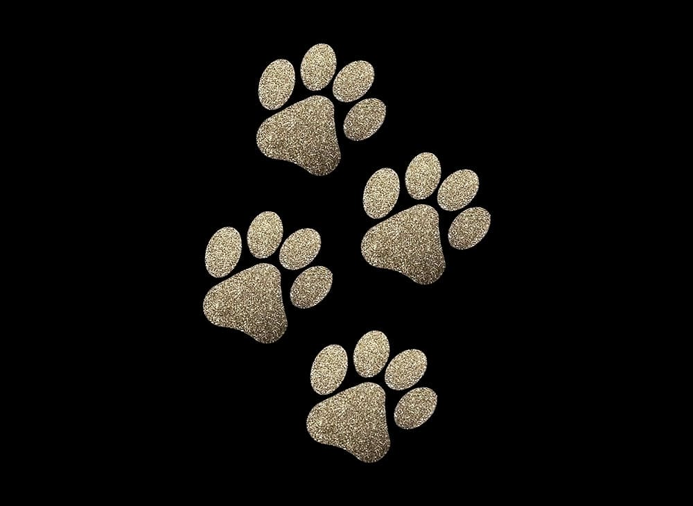 Image of Gold Paws HTV Glitter Design